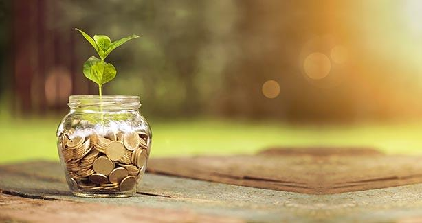 Plant growing out of a jar of coins